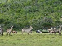 Shamwari Safari 7