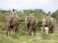 kapama-ellie-safari