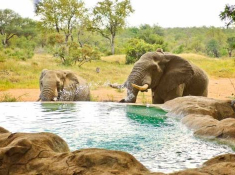 motswari-ellies-at-pool