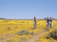 bushmans-kloof-biking