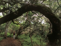 grootbos-milkwood-forest