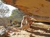 bushmans-kloof-rock-painting