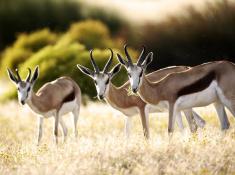 bushmans-kloof-wildlife