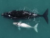 de-hoop-whales