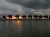 kapama-elephantback-safari
