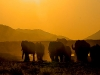 tuningi-elephants