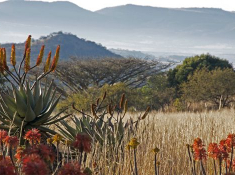 three-trees-aloe-mountain-view