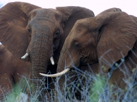 white-elephant-lodge-elephants
