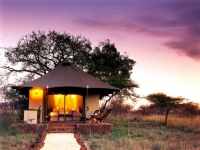 white-elephant-safari-lodge