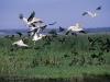 hluhluwe-birds