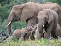 safari-lodge-elephant-family