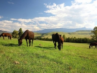 Montusi Mountain Lodge Horses