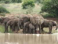 Mziki Lodge Elephant Sighting