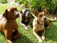 Retreat at Groenfontein Dogs