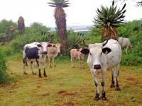 Spionkop Lodge Animals