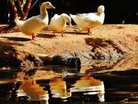 Tzaneen Country Lodge Animal Farm