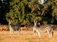 Tzaneen Country Lodge Wildlife