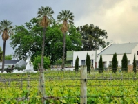 VDC Vineyards