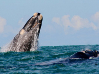 Agulhas Country Lodge Whale Watching