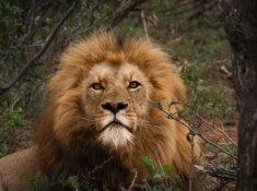 Amakhosi-Safari-Lodge-Wildlife-1