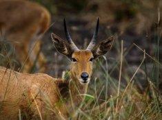 Amakhosi-Safari-Lodge-Wildlife-2