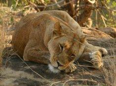 Amakhosi-Safari-Lodge-Wildlife-4