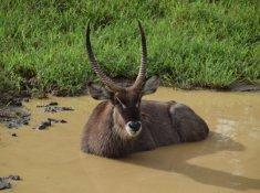 Amakhosi-Safari-Lodge-Wildlife-7