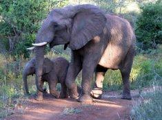 Amakhosi-Safari-Lodge-Wildlife-8