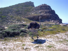 cape-point-3-exclusive-getaways