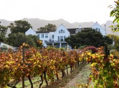Cellars Hohenort Vineyards