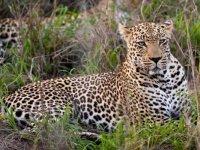 Cheetah Plains 18