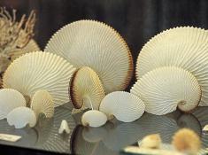 Diaz 15 Shells