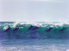 Diaz 15 dolphins