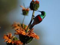 grootbosbird-on-flower
