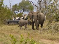 Dulini Elephant Sighting