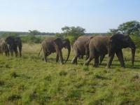 Entabeni Elephants