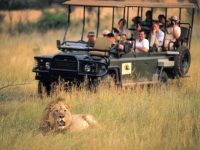 Entabeni Lion Sighting