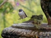 Fynbos Ridge Bird at Bath