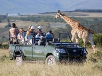 Gondwana Game Drive Giraffe