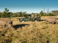 Gondwana Game Drive Rhino