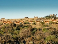 Gondwana Game Drive