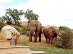Gorah-Elephant-Sighting