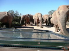 Gorah-Elephants-on-Game-Drive