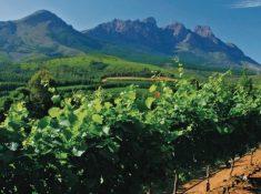 Grand-Dedale-Vineyards