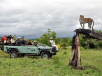 Idube Game Lodge Leopard Sighting