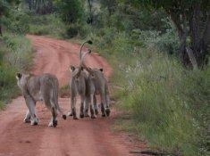 Inzalo-Safari-Lodge-19