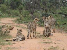Inzalo-Safari-Lodge-28