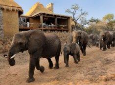 Camp-Jabulani-Zindoga-Villa-Elephant-Viewing-2