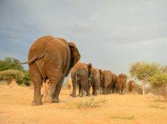 Jabulani-Safari-Wildlife-1