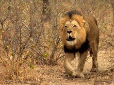 Jabulani-Safari-Wildlife-5